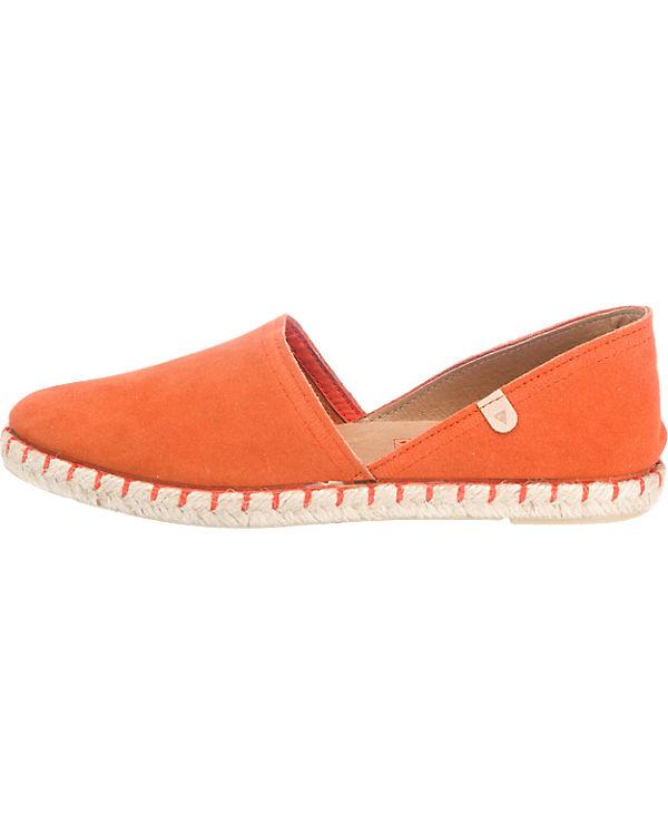 Verbenas Slipper orange